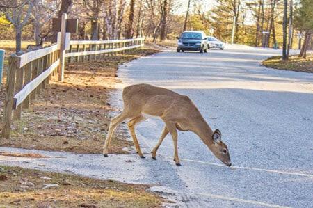 hit a deer