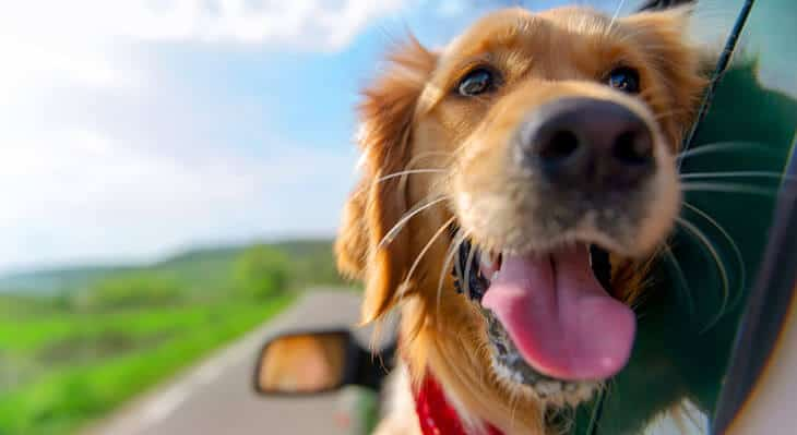 dog friendly road trips