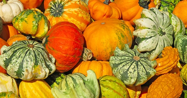car_pumpkin_banner