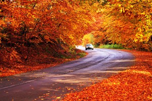 pumpkin road trip