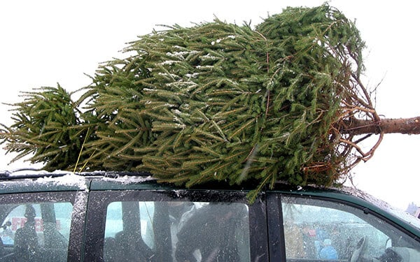 how to tie a Christmas tree to a car