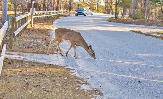 car insurance hitting deer
