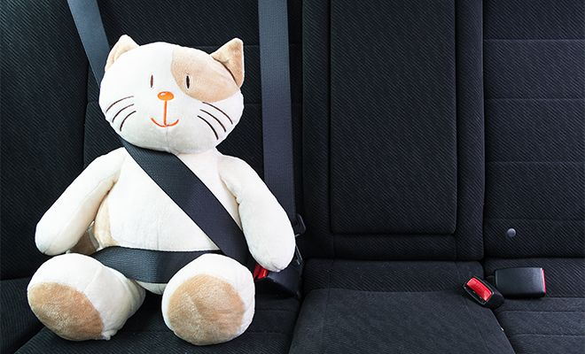Seat Belt Laws By State Do You Need To Wear A Safety Belt