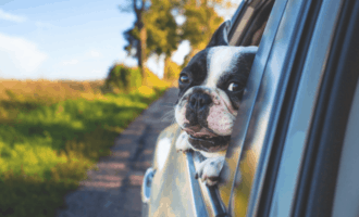 Does Car Insurance Cover Pets?