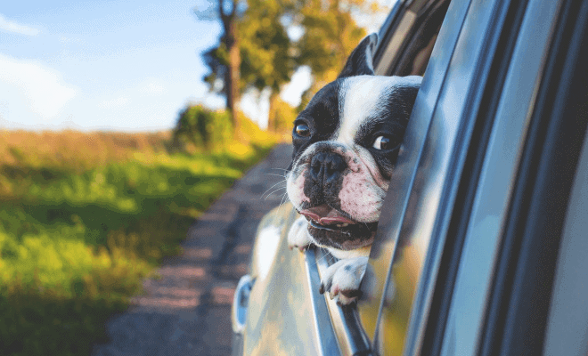 Is your pet covered in case of an accident?